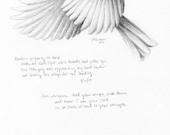 Bird Drawing, Bird Sketch, Nature Journal, Inspirational