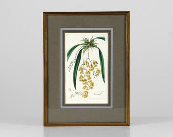 Vintage botanical print, antique plant print, botanical lithography, framed botanical print, gold frame wall deco