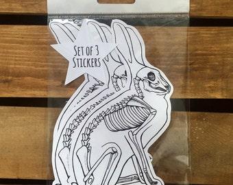 Bunny Rabbit Anatomy Stickers - Set of 3 - Black and White Bunny Stickers - Rabbit Sticker - Die Cut sticker - Easter Sticker - Anatomy Art