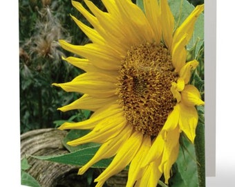 Sunflower - single blank card, Gifts for her, Gifts for mom, Gifts for gardeners, Gifts for nature lovers