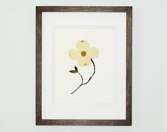 Botanical Art, Dogwood Print #105, Pressed Botanical Art Print, Fine Art Print, Wildflower Print, Pressed Flower Art, Botanical Wall Art