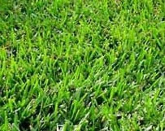 Bermuda Grass Seed Raw - Un-Hulled