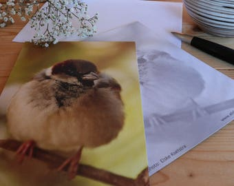 Sparrow - Map postcard 10 x 15 cm