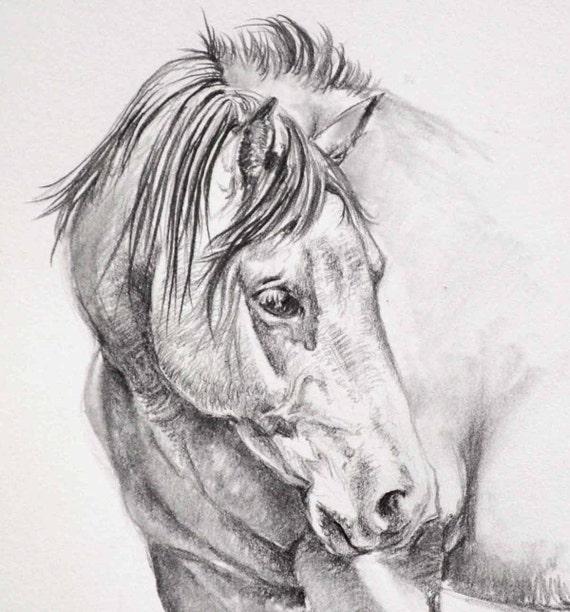Cavallo originale disegno a matita for Immagini cavalli da disegnare