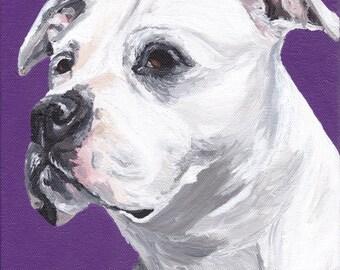 Pit Bull art print, pit bull prints, white pit bull art, Pit Bull Canvas art, from original pit bull painting