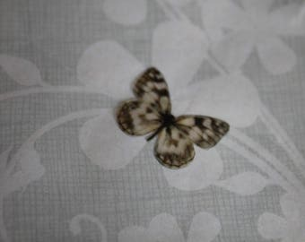 transparent Butterfly beige and Brown 1.8 x 1.4 cm, n135