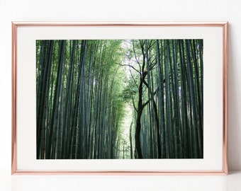 Bamboo Forest, Japan, Kyoto, Nature, Landscape,Download Digital Photography, Print, Downloadable Image, Printable Art