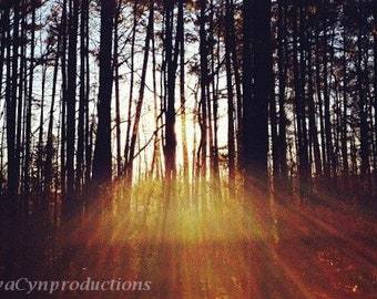 "Art Photography ""Forest Through the Trees"" Unframed Photography Giclée Print. ChyaCyn productions. Art Photo Sunrays forest. Morning Light"