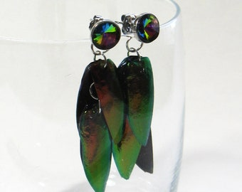 real elytra jewel beetle wing cases