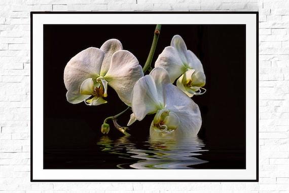 Orchidee Print Blumen Fotografie Wandkunst Orchid Flower