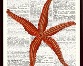 Starfish Art,Nautical Art, Star fish Poster,Sea Star Print,bathroom decor,Beach Cottage Decor,Educational Poster,School decor Starfish SKUS6