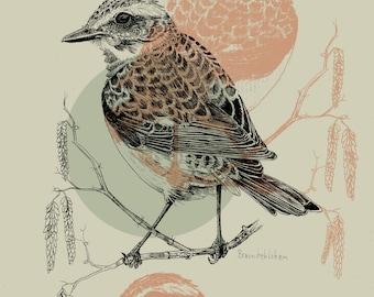 Braunkehlchen, DinA4 Kunstdruck, 300g, Rote Liste bedrohter Vögel, vegan, Naturillustration