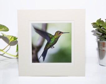 Green Crowned Brilliant Hummingbird Print, Hummingbird Wall Art, Bird Home Decor, Gift for Nature Lover, Bird Photography Gift, Bird Picture