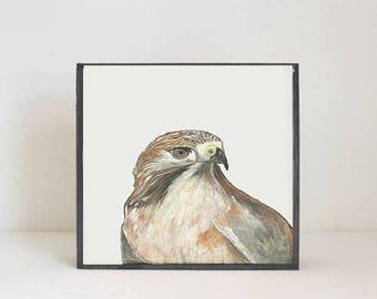 hawk woodland nursery art- bird art print- forest animals- nursery woodland art- animal print- nursery forest decor-bird decor redtilestudio