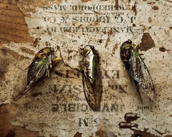 Sex and Death No 3 Invincible (three cicadas)