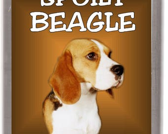 """Beagle Hound Dog Fridge Magnet """"A Very Spoilt Beagle Lives Here"""". Great Gift for any Dog Lover"""