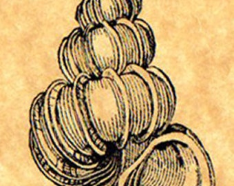 Wentletrap Shell Rubber Stamp