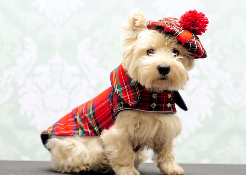 manteau pour chien tweed manteau pour chien scottish westie. Black Bedroom Furniture Sets. Home Design Ideas