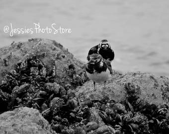 Resting Birds Canvas Photograph Size - A2, A3 + A4.
