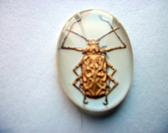 Vintage Glass Intaglio of a Bug/Scarab