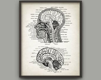 Head and Brain Antique Anatomy Wall Art Poster #2 - Neuroscience - Neuroanatomy - Physiology - Medical Student Gift - Brain Anatomy Print #2
