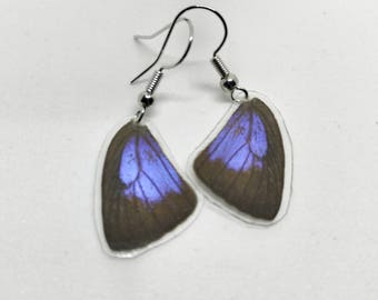 Real Butterfly Wing Earrings (Blue and Black)