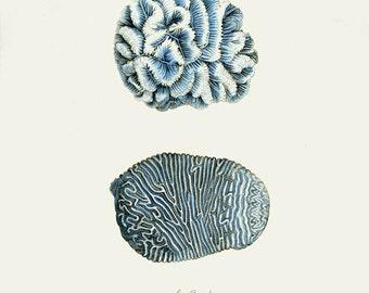 Vintage Sea Coral Print 8x10 P108
