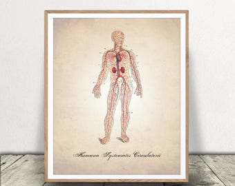 Circulatory System PRINTABLE, Human Anatomy Art Print, Human Anatomy Print, Circulatory System, Human Body Diagram, Anatomy DOWNLOAD, Print