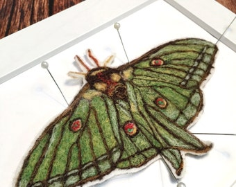 Luna Moth Art, Insect Art, Butterfly Art, Butterfly Artwork, Butterfly Decor, Framed Insects, Taxidermy Insect, Bug Art, Nature Lover Gift