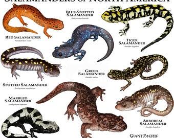 colorful salamander 55253 movieweb