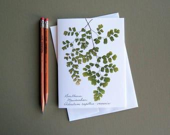 Southern Maidenhair fern card, pressed fern card, green ferns, botanical card, card for a gardener, greeting card no.1180