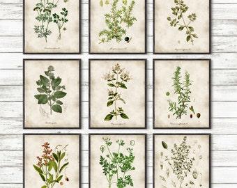 Kitchen Herbs, Kitchen Wall Art, Print Set of 9, Vintage Botanical Herb Prints, Herb Kitchen Decor, Herbs Illustrations, Botanical Decor