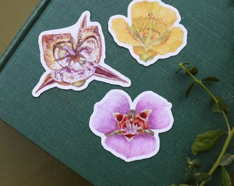 Mariposa Lily Stickers: Butterfly Mariposa Lily, Yellow Mariposa Lily, Tiburon Mariposa Lily Vinyl Stickers
