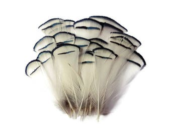 Set of black and white natural feathers