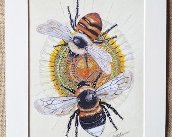 Bee Art Bee Print Bee Wall Art Bumblebee Painting Bumblebee Artwork - Duo Bees On Daisy a colourful image. A Garden bumblebee & Carder bee.