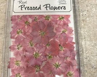 Pink Larkspur  25 flowers