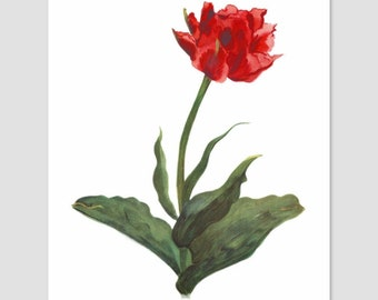 """Red Tulip Watercolor Print Wall Art (Garden Poster French, Country Flower, Spring Decor Vintage Download) -- 1930s PRINTABLE Art """"Electra"""""""