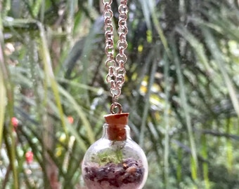 BOTANY in a BOTTLE ~ live terrarium necklace