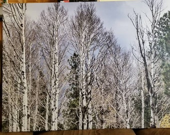 Aspen trees 40 x 30 canvas or you can pick a different size. Made to order.