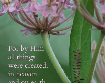 21. Monarch Caterpillar on Pink Milkweed; Photo greeting card; Nature art print; Gift; Inspirational Scripture Colossians 1:16