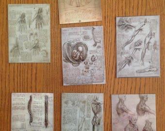 DaVinci MAGNETS sketchbook biology Leonardo renaissance medicine human anatomy bones muscles Italy reference master inventor vinyl