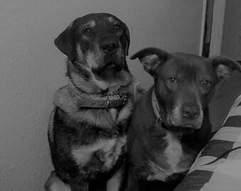 Chevy and Sheba