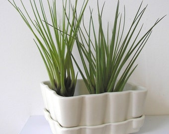 succulent planter vase, wheat grass or air plant