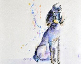 Standard poodle Illustration fine art print