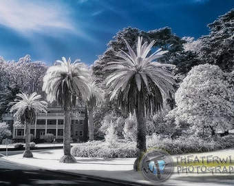 The Presidio-San Francisco in Infrared  Fine Art  Photographic  Print