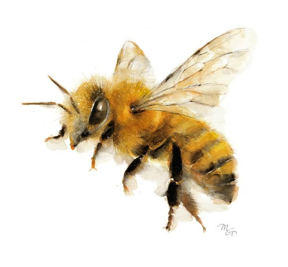 Honey Bee Watercolor Painting Giclee Print. Nature