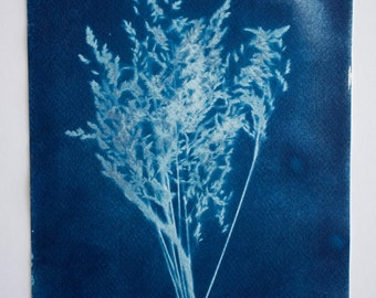 Blue Grass - Original Cyanotype