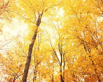 autumn photography, yellow home decor, orange home decor, tree photography, fall leaves, fall decor, autumn decor, nature photograph