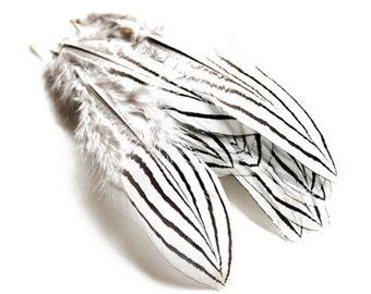 Black & White Silver Pheasant Feathers 2.5-4″ | 10 pcs.