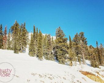The Teton Pass Forest